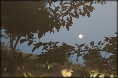 Bahadın'da Bir Gece